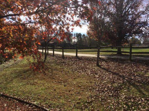 Camp Oak Hill Autumn Leaves